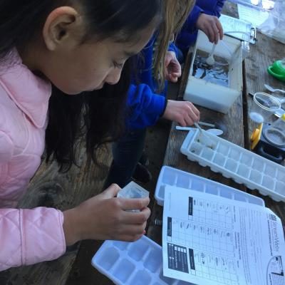 4th grader collects macroinvertebrate data