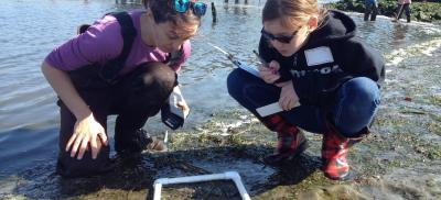 Researcher and student look at a quadrat in the mud