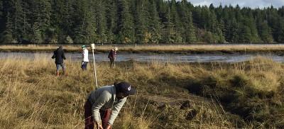 Carbon Wetlands