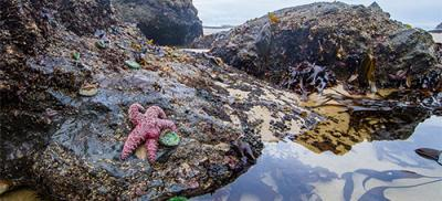 Sea star on a rock in a tidepool.